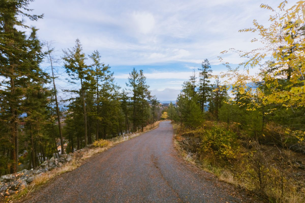 A paved service road heads downhill through a pine forest on an overcast day. View down the road from the summit of Dilworth Water Tower.