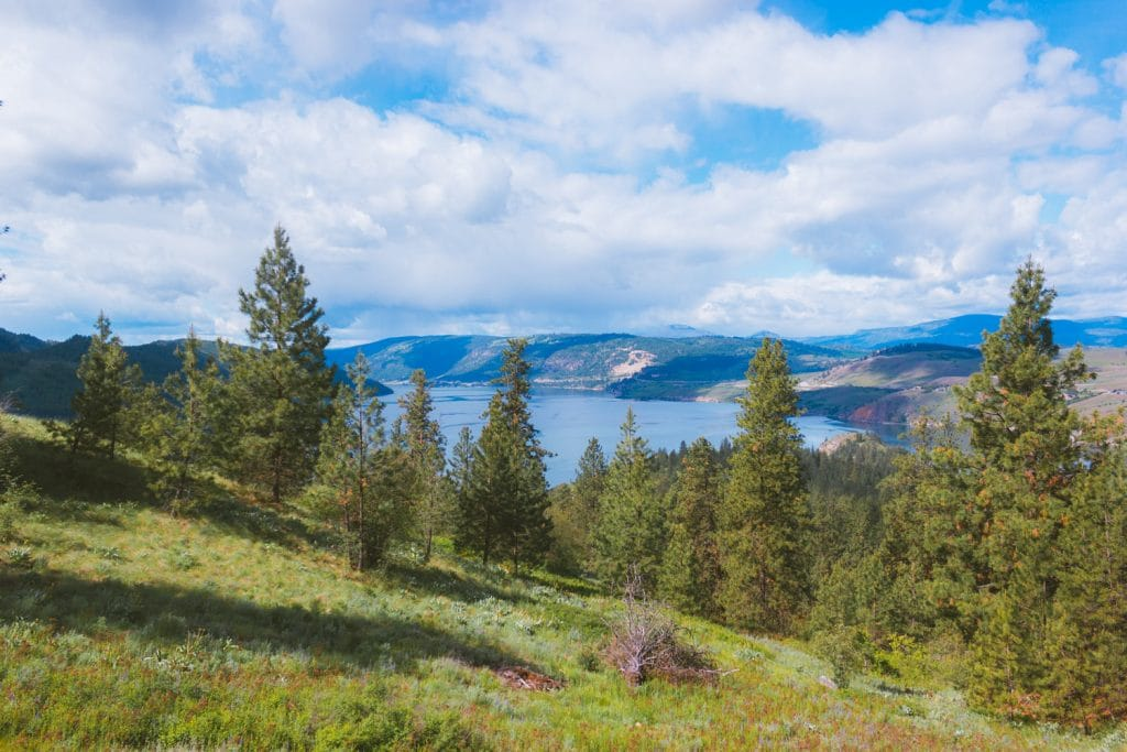 View of Kalamalka Lake through the pine forest from the hiking trail