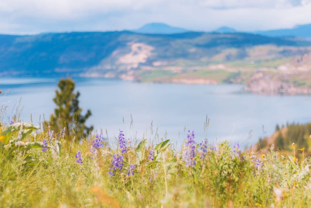 Wildflowers overlooking Kal Lake