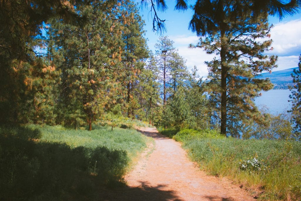 Forested hiking trail in West Kelowna, BC