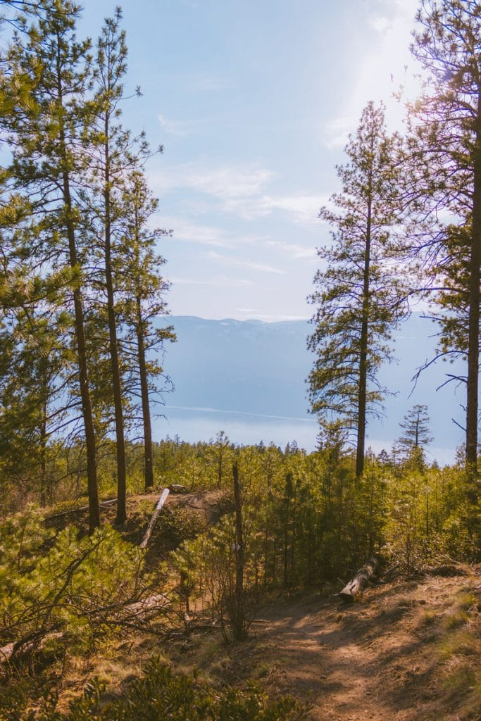 View of Okanagan Lake through the trees on a moderately difficult hiking trail in Lake Country, BC