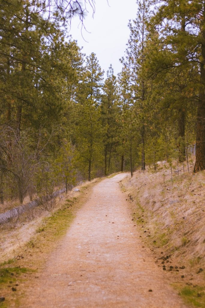 A trail through a Ponderosa Pine forest