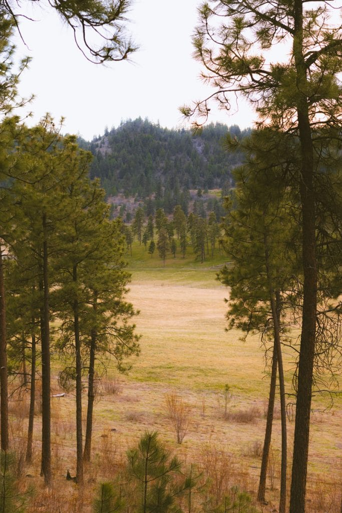 View of a field from the Quail Flume Trail in Glenmore