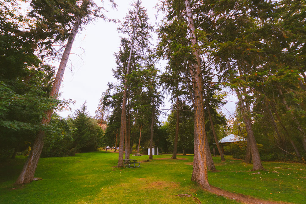 Forested picnic area at Bertram Creek Park