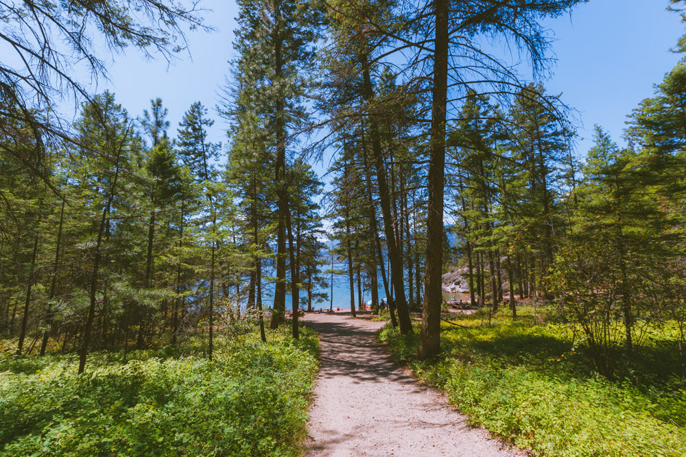 The forest around Ellison campground is made of Ponderosa pine and Douglas fir