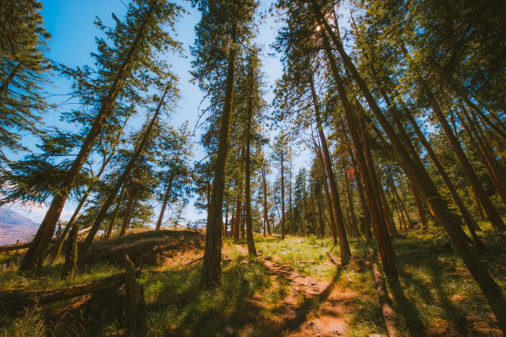 Hiking trail through the forest in the Okanagan