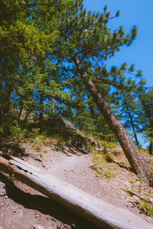 Obstructions along the hiking trail on Pincushion Mountain