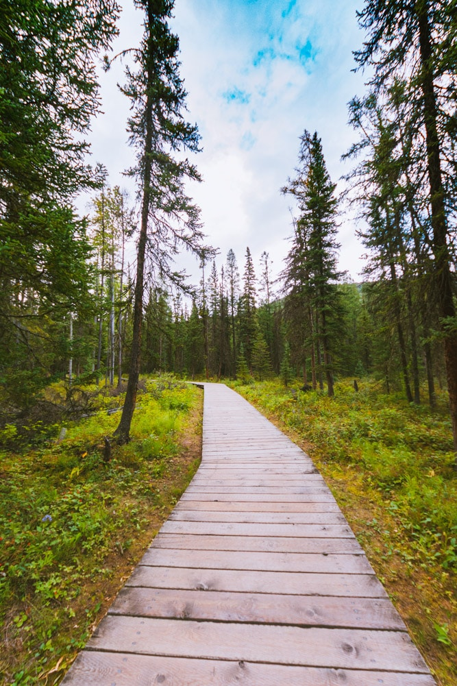 Boardwalk through the boreal forest at Liard Hot Springs