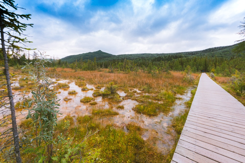 Boardwalk through a marsh at Liard Hot Springs in northern BC