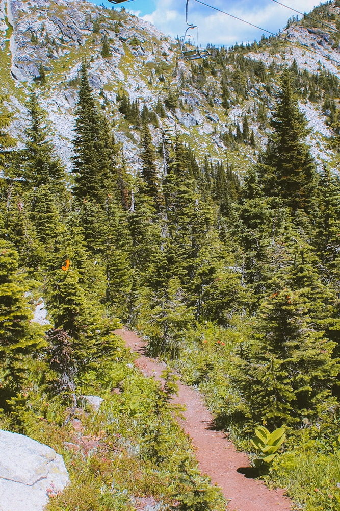The Rhonda Lake Trail goes through a thick forest at Big White