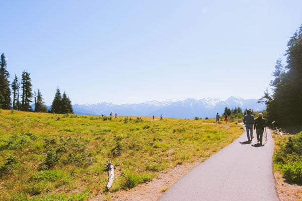 A hiking trail disappears into the distance, lost in a sea of green grass on the Hurricane Ridge hiking trails