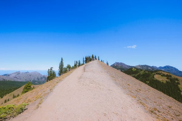 A ridge top hiking trail at Hurricane Ridge with mountains and cliffs on either side.