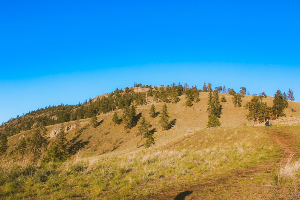 Grassy hillside on Knox Mountain.