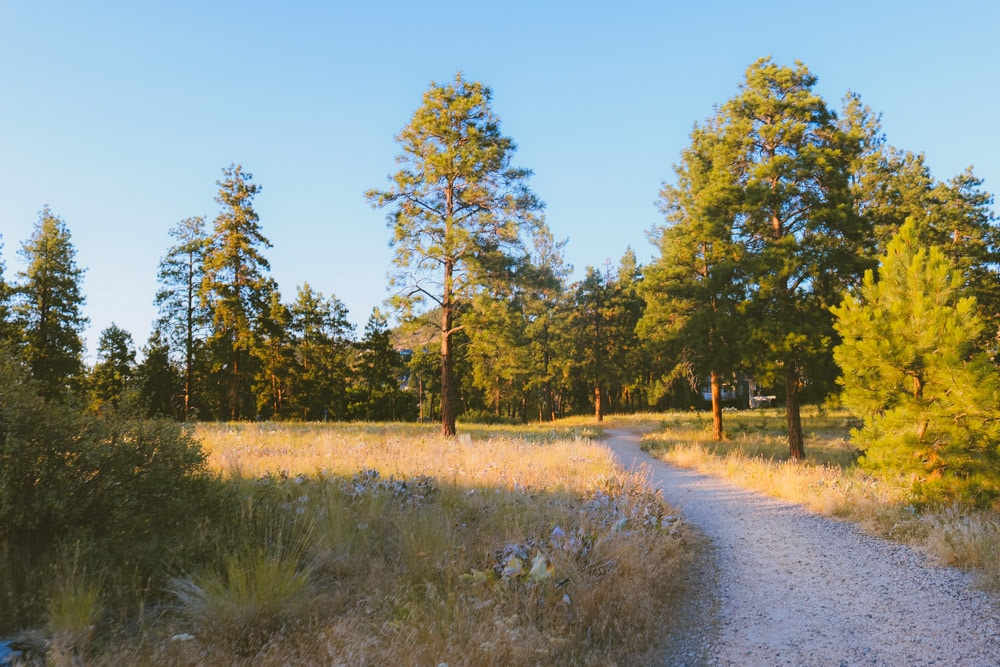 Easy hiking trail at Dilworth Mountain Park through a lightly forested area