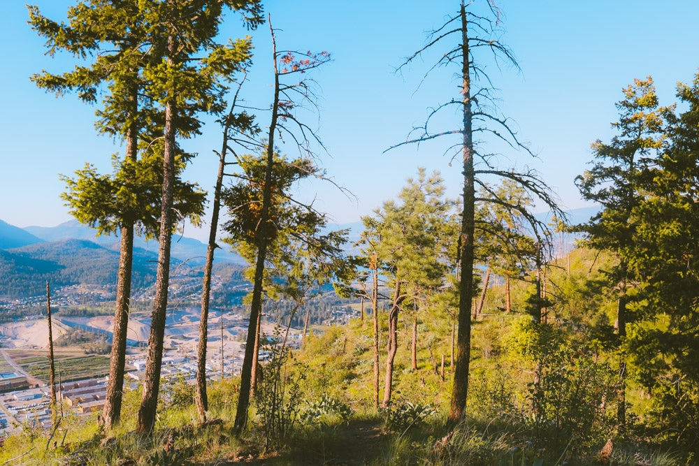 Forested view of West Kelowna from the Eain Lamont trail on Mt Boucherie