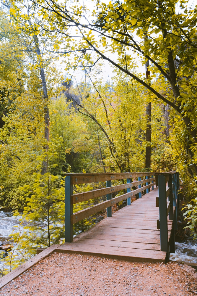 Bridge over Bear Creek in a thick forest.