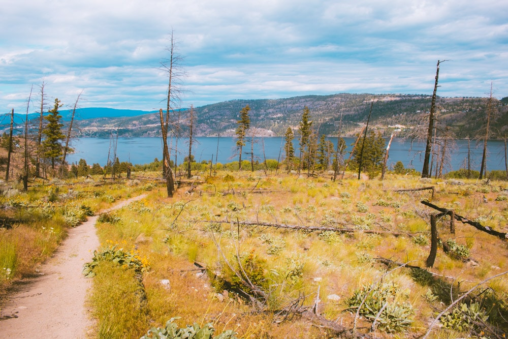 View of Okanagan Lake from the grassy mountainside at Bear Creek