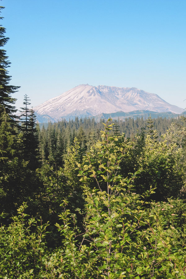 View of Mt St Helens from Bear Meadows.