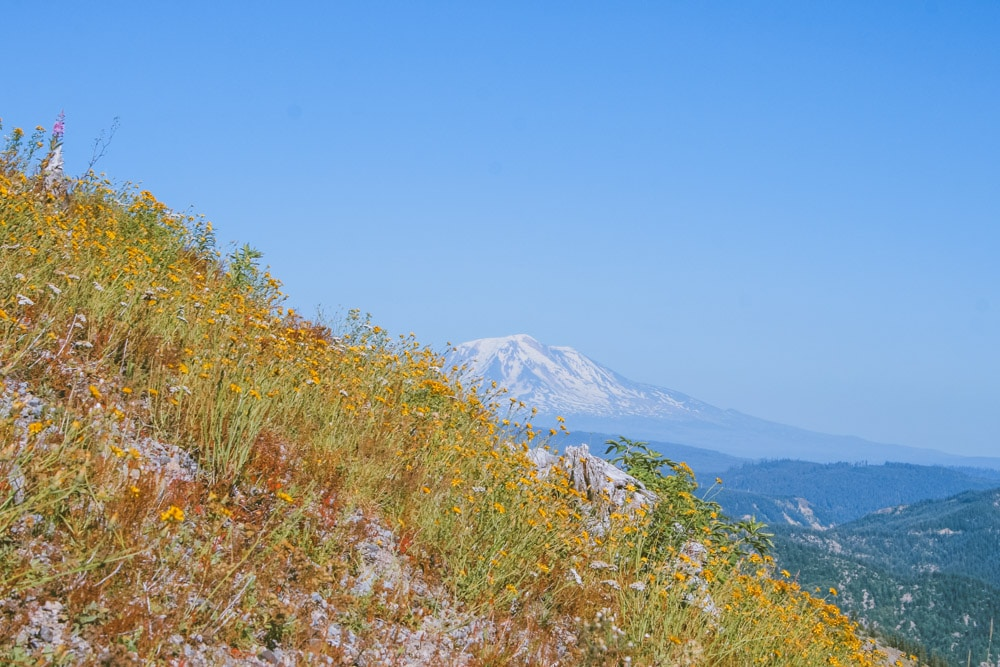 View of Mt Adams from Windy Ridge Viewpoint