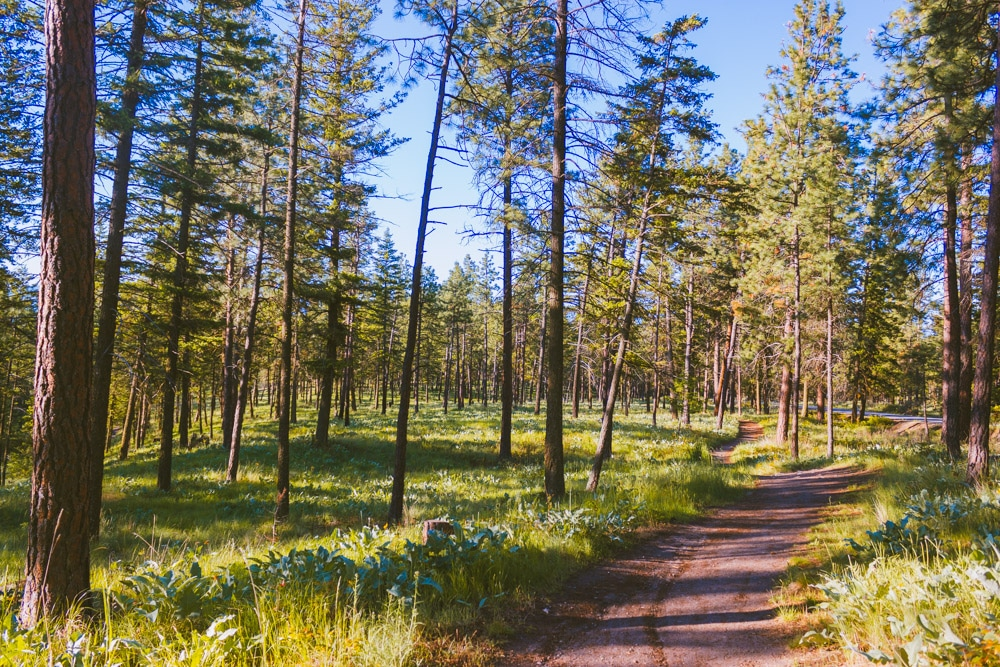 A small trail through a thinly forested forest on Knox Mountain.