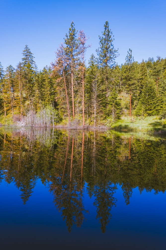 The picturesque reflection of trees at Kathleen Lake on Knox Mountain