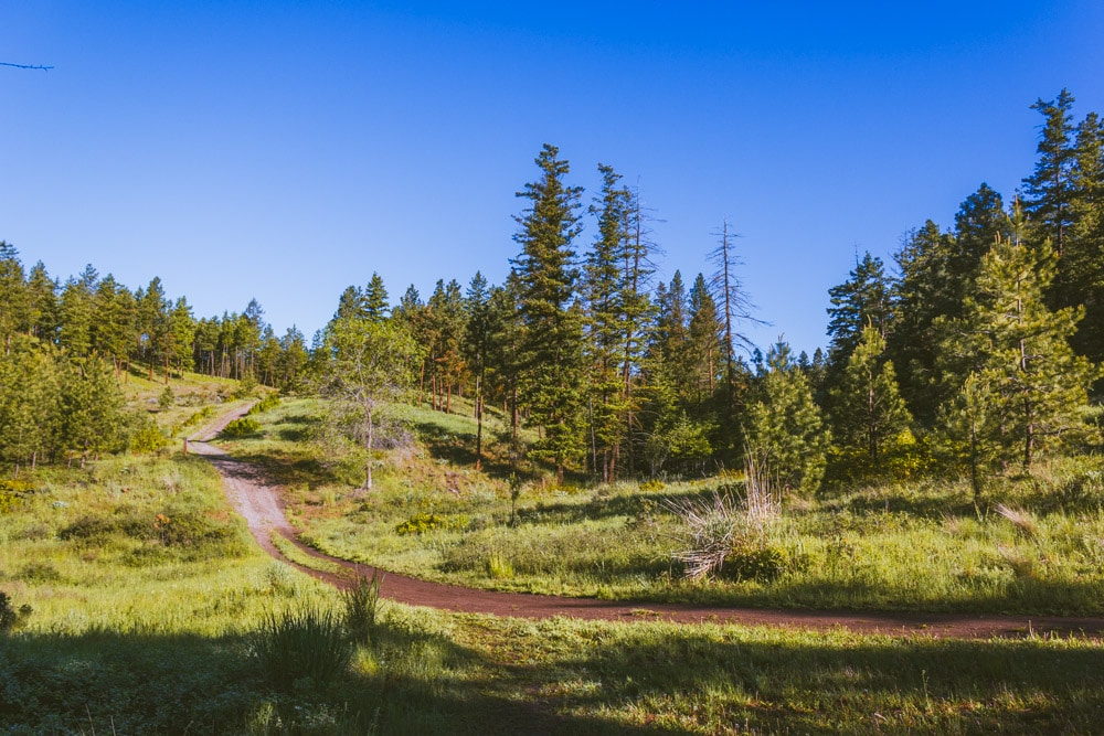 The forested trail around Kathleen Lake.