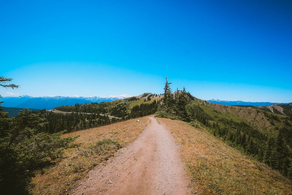 A mountaintop ridge trail on a hike in Olympic National Park.