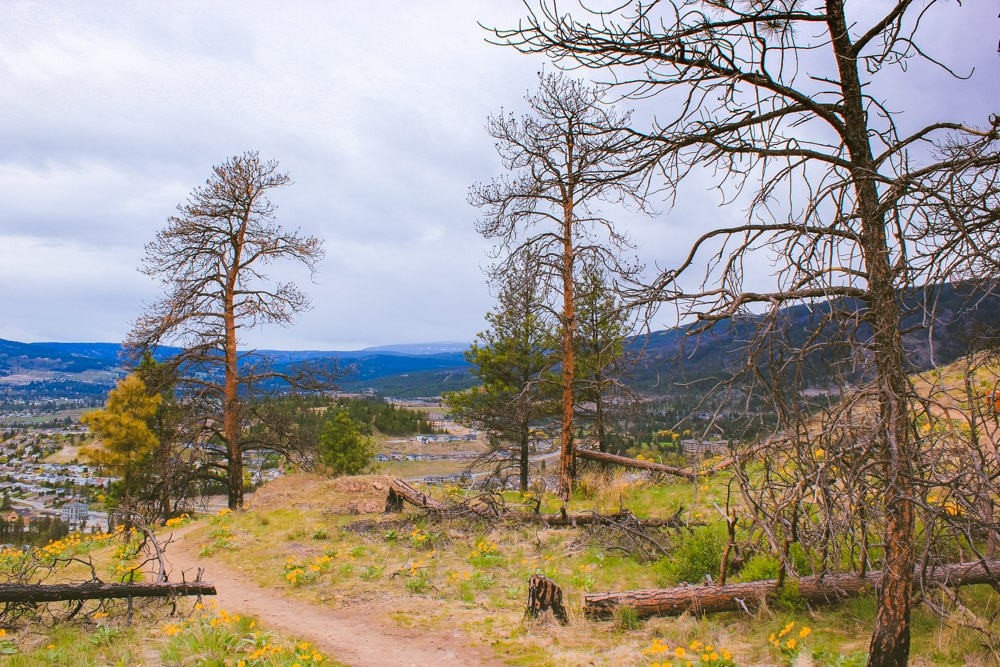 A few trees on a moderate hiking trail in West Kelowna