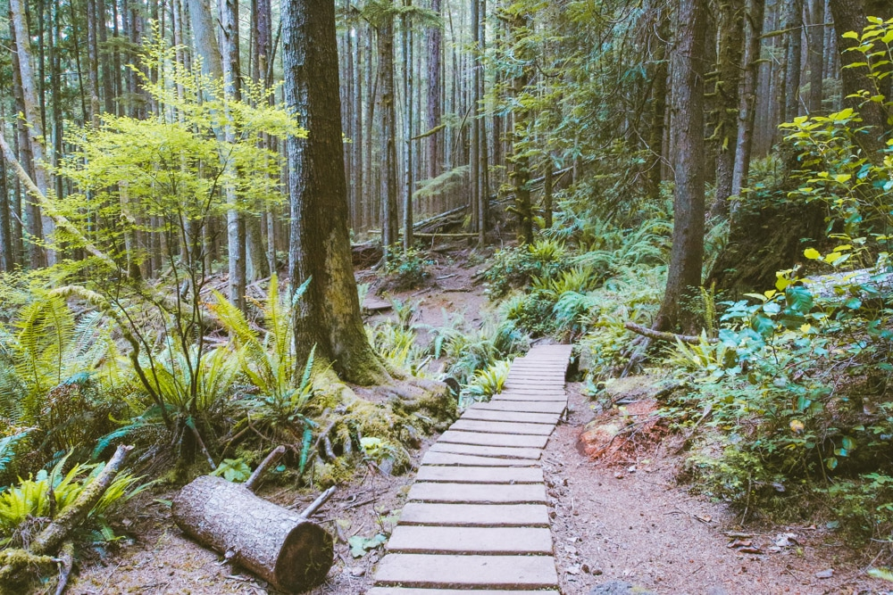 Boardwalk on a heavily forested trail