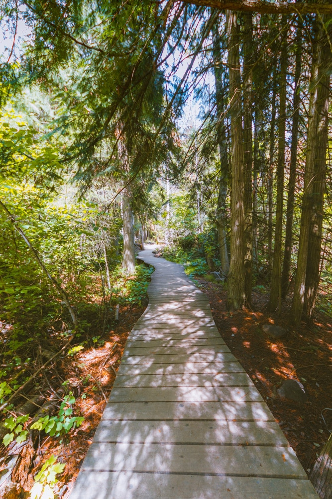 A curved boardwalk through the forest at Mill Creek Regional Park