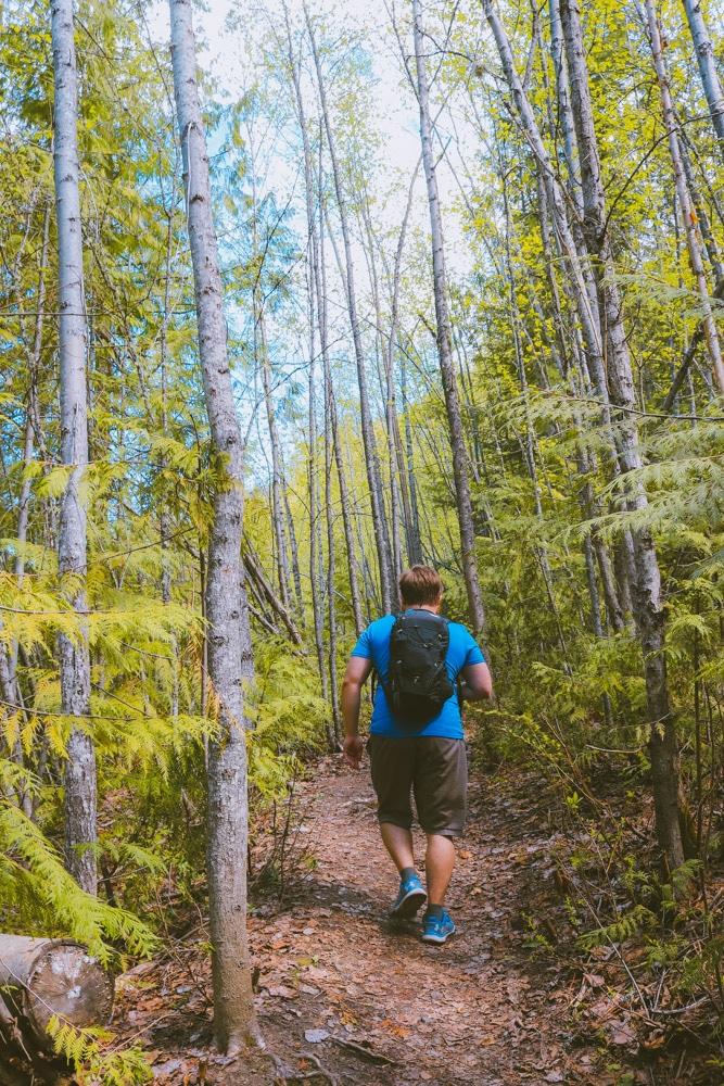 Man hikes through a forest of birch on the Enderby Cliffs trail