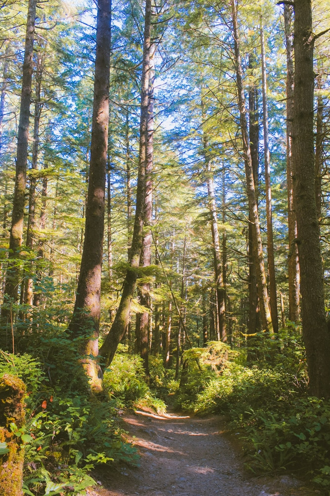 A green, thickly forested trail through to the ocean in Washington state.