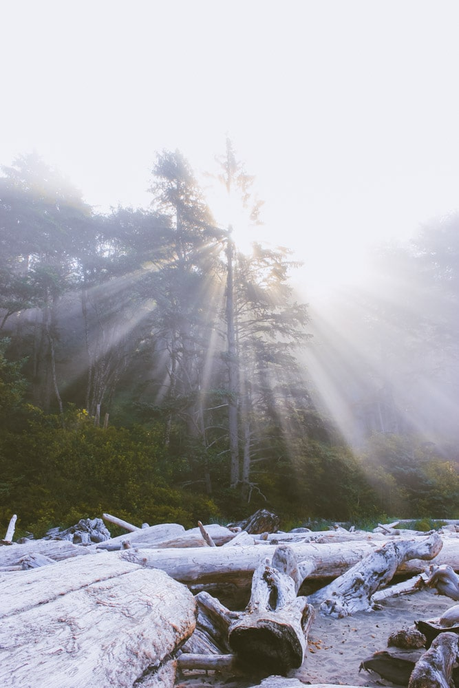 The sun rays come through the forest in the early morning at Second Beach.