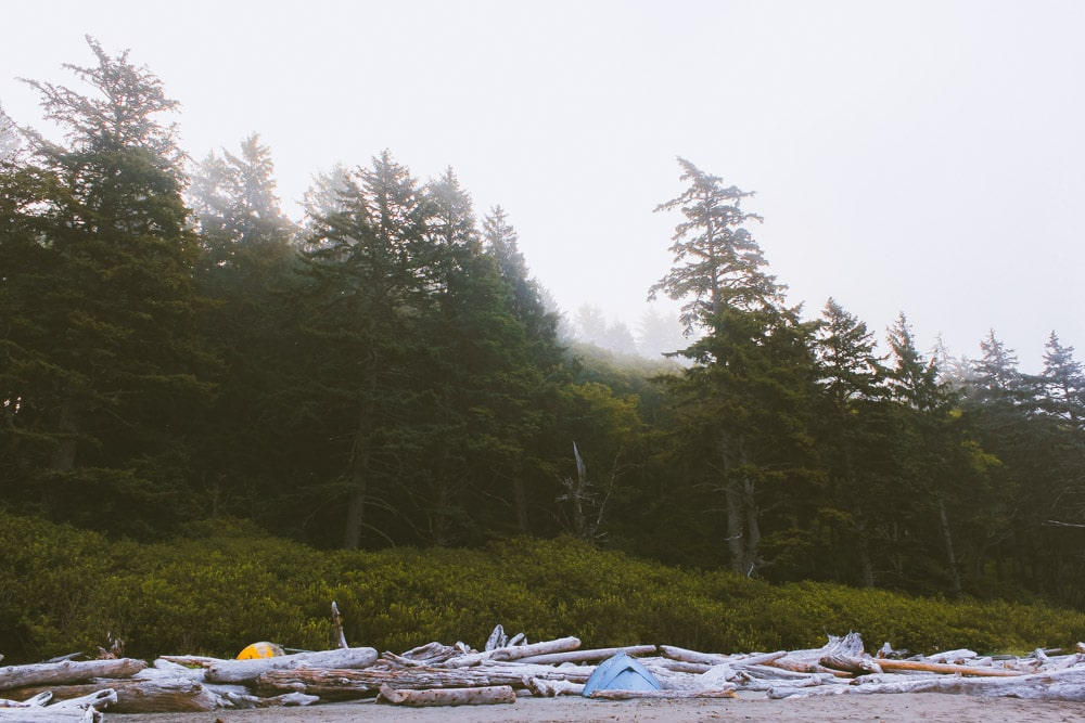 Sun rays shine through the trees at Second Beach. Tents are nestled in the driftwood.