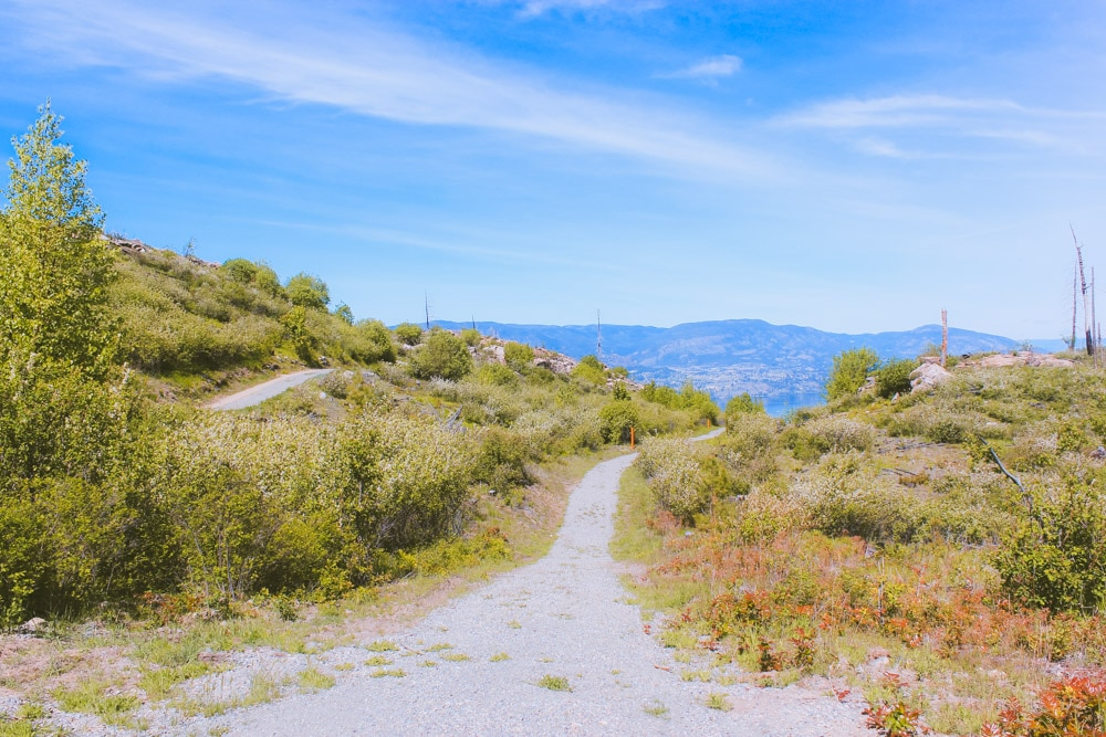 One of the hiking trails at Johns Family Park in Kelowna, BC.