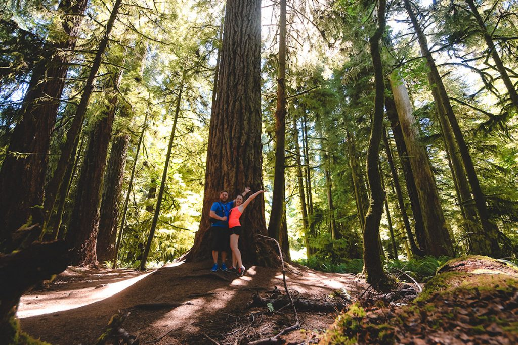 Cathedral Grove at MacMillan Provincial Park on Vancouver Island