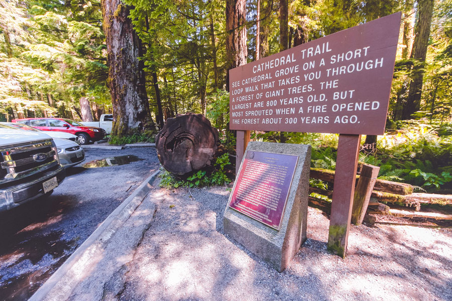 The trailhead at Cathedral Grove