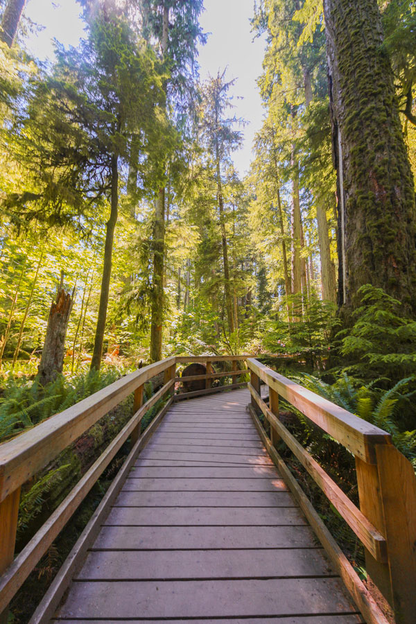 The boardwalk at Cathedral Grove in MacMillan Provincial Park