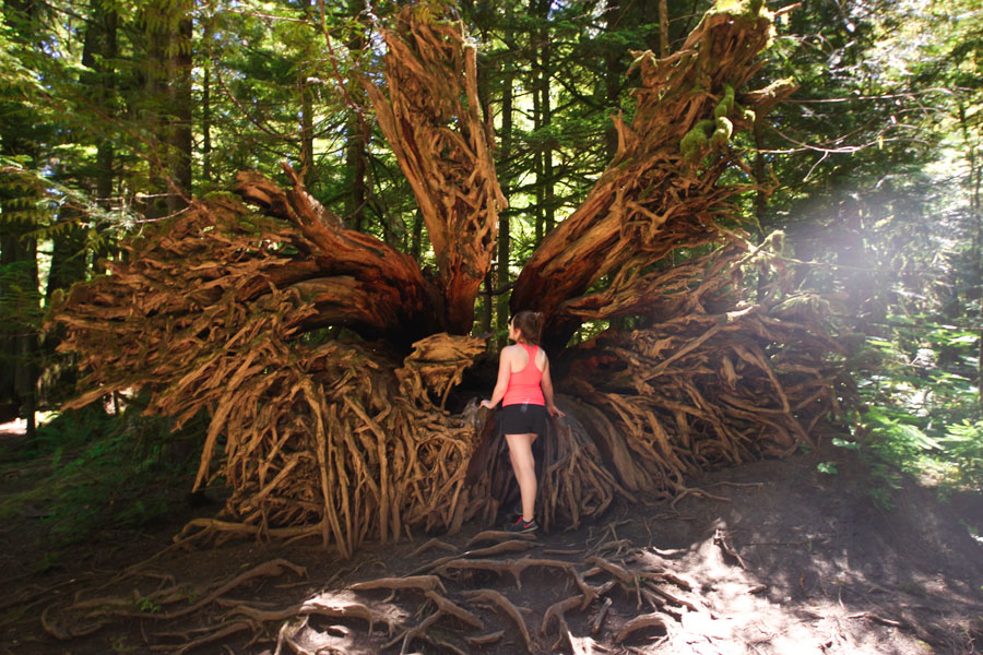 Woman stands in front of a large root system at Cathedral Grove