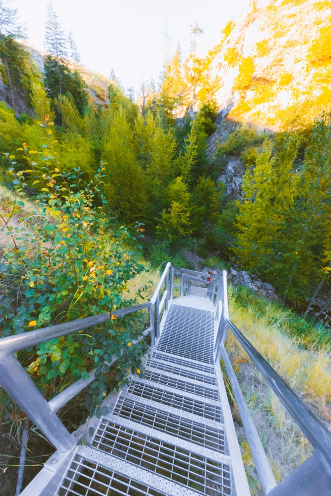 View down a metal staircase in a forested canyon.