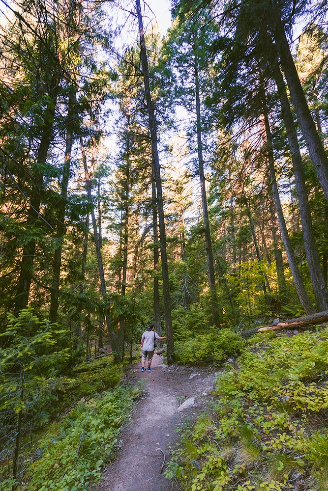 Man hikes on a forest trail near Falkland.
