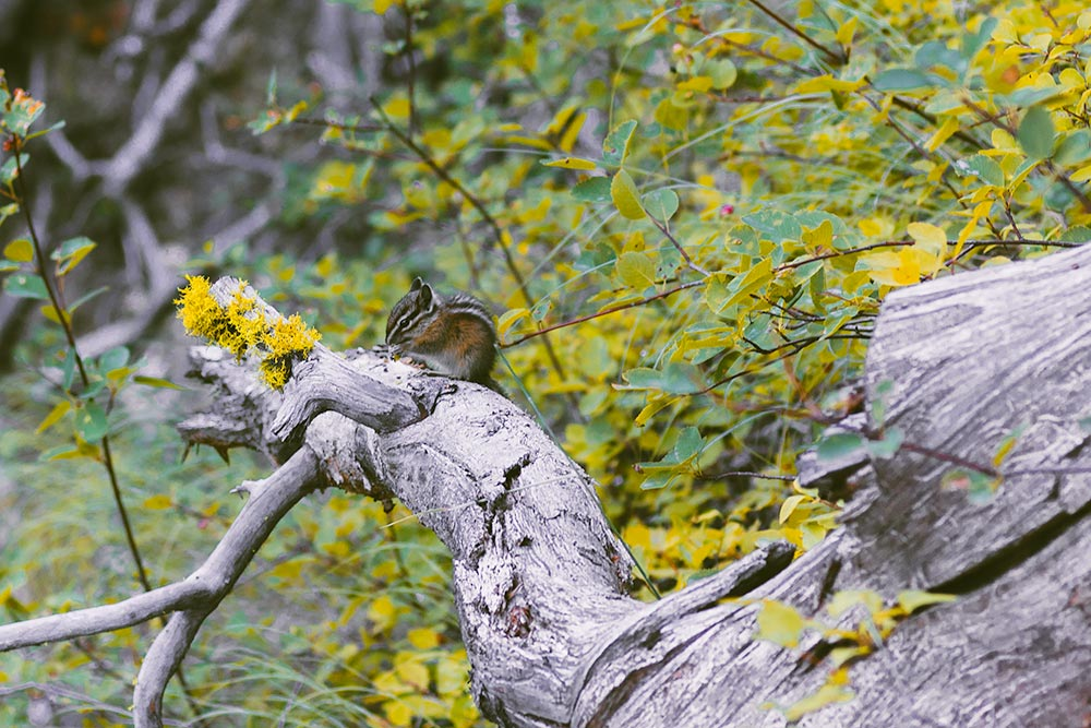Close-up view of a chipmunk sitting on a branch.