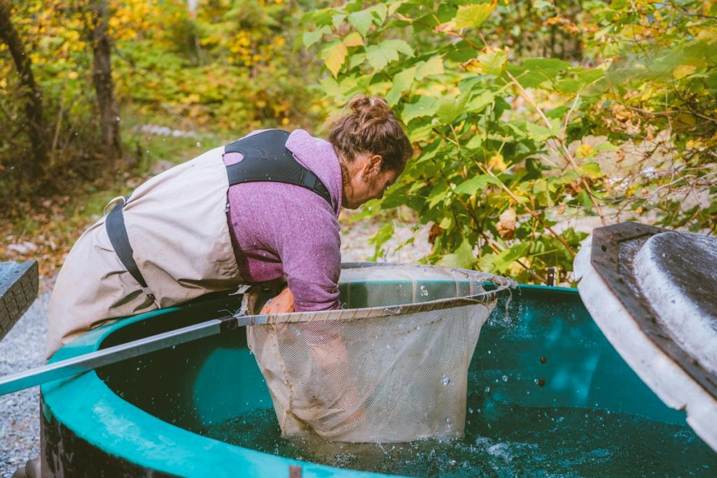 A woman grabs a salmon from a net in a large pool
