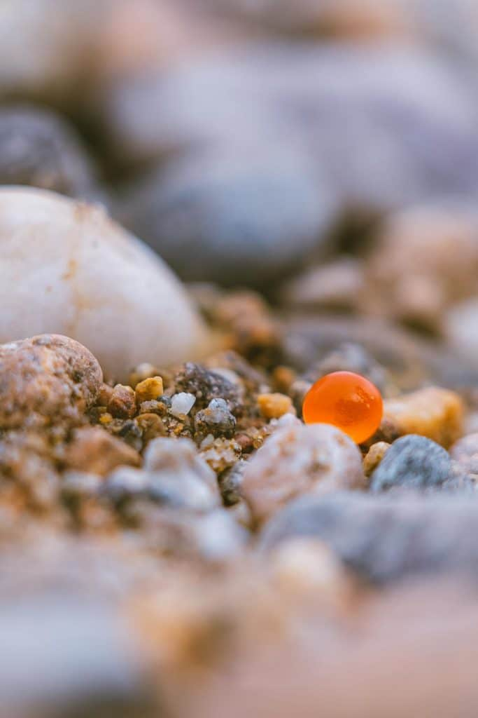 A single salmon egg on the shores of the Shuswap River