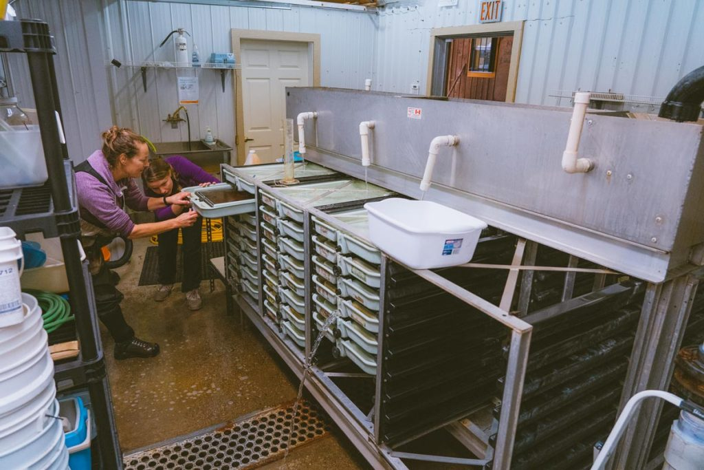 Two women work inside the hatchery at the Kingfisher Interpretive Centre