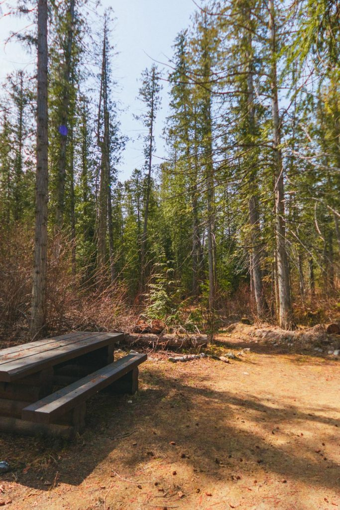 A picnic bench in the forest surrounding the Kingfisher Interpretive Centre