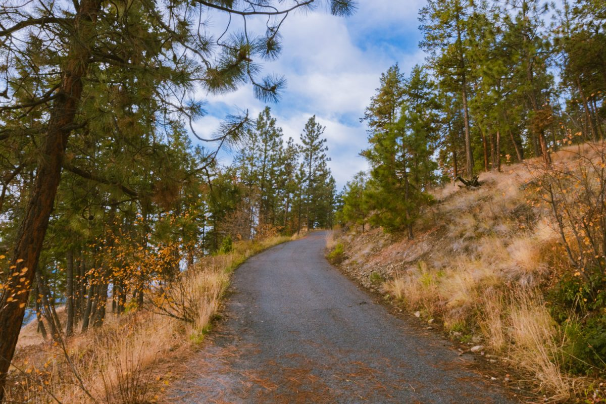 A paved service road winds through a forest on Dilworth Mountain.